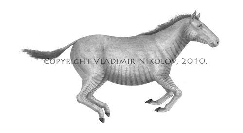 equidae extintos Pliohippus
