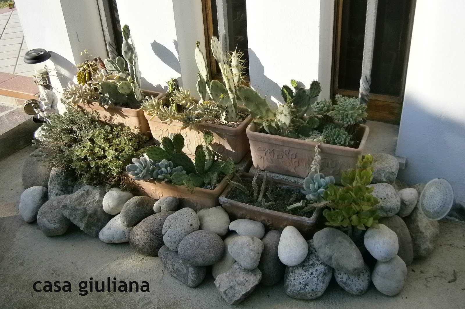 Casa giuliana le mie piante grasse vere for Piante grasse da casa