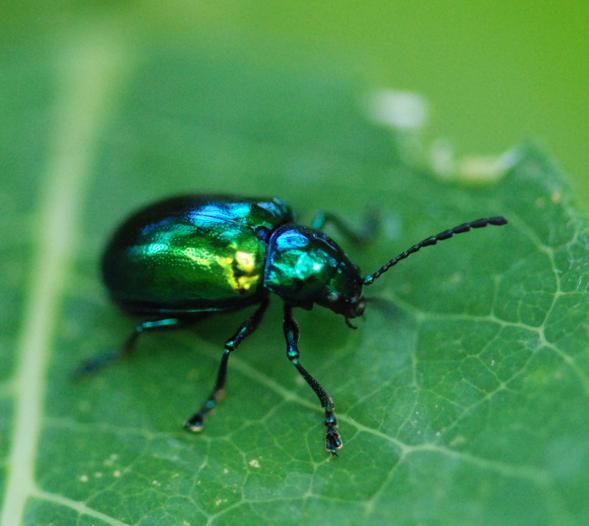 Metallic Beetle Green Paint