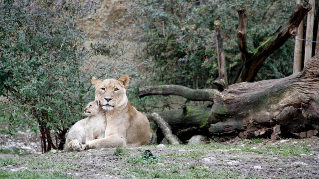 Zoo Basel Suíça