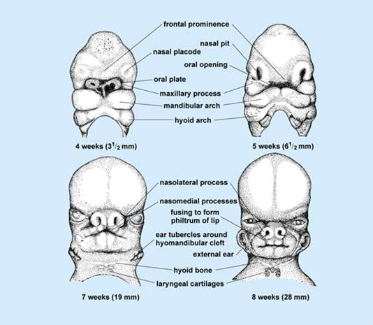 ENT for medical students: NOSE - Anatomy & Physiology