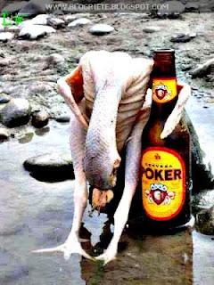Pollo borracho imagenes humor