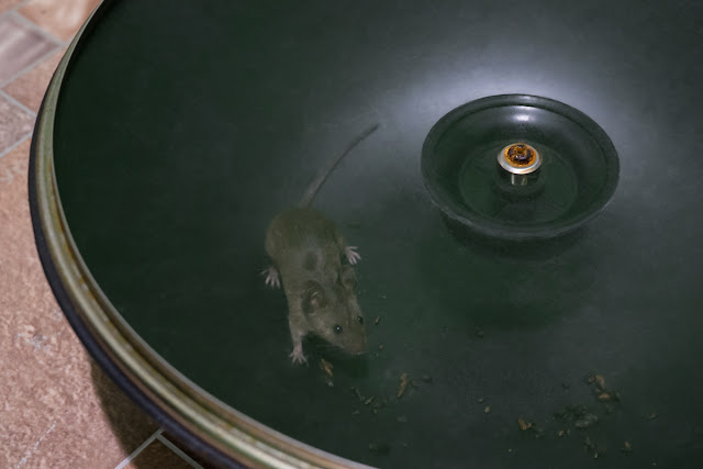 Мышка в сковородке.