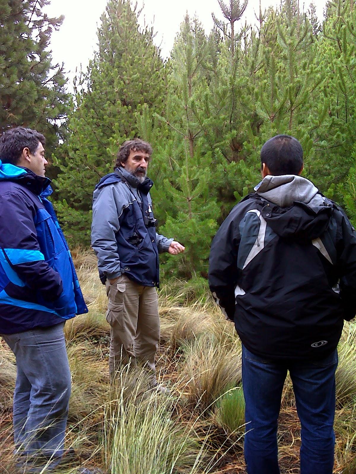 Patagonia andina forestal muestreo de especies forestales for Viveros en neuquen