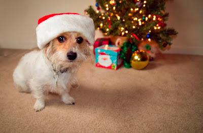 Perrito con gorrito de navidad