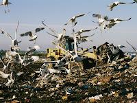http://3.bp.blogspot.com/-jiFCvar1kQ4/Tk65wlaAR9I/AAAAAAAAANE/ZJNohvU2sz0/s1600/melissa-farlow-seagulls-feast-on-a-garbage-dump-in-the-meadowlands.jpg