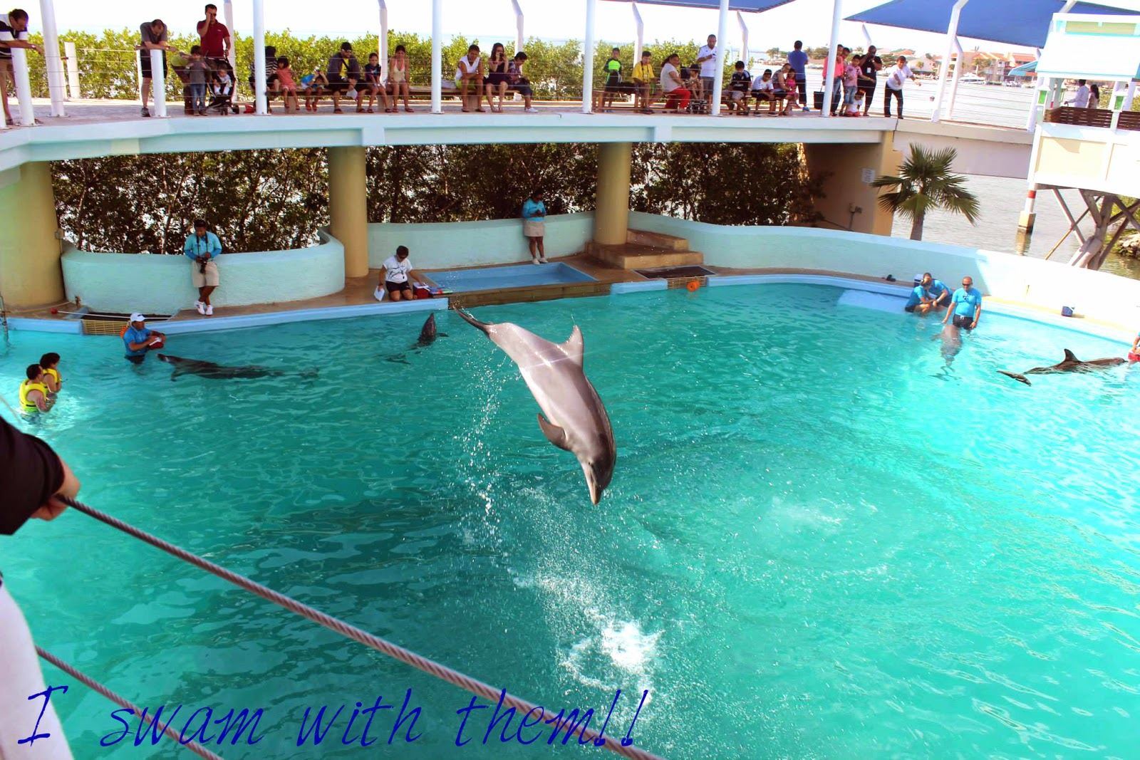 Swimming with Dolphins Cancun