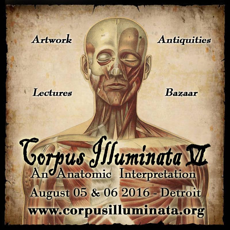 Corpus Illuminata VI