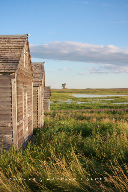 Wildly simple prairie homestead rural north dakota for Is there any homestead land left in america