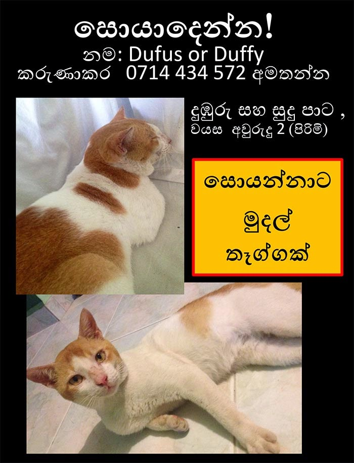 Please help us to find Dufus.