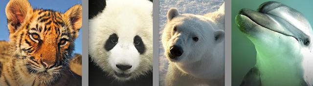 save endangered species essay