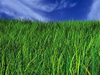 field of green grass under a deep blue sky