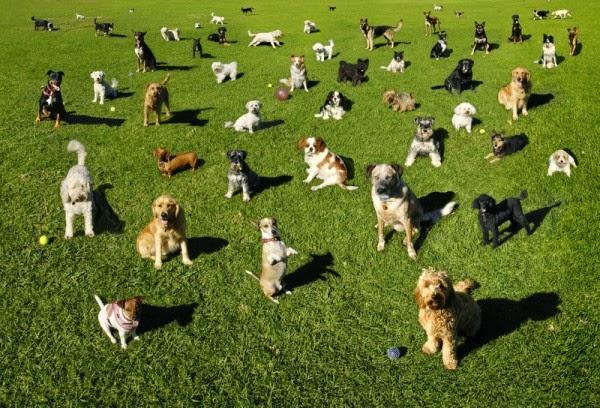 Adiestrar tu mascota - Adiestrar perros