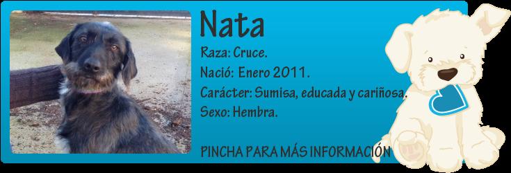 http://mirada-animal-toledo.blogspot.com.es/2013/01/nata-usada-para-caza-busca-hogar-donde.html