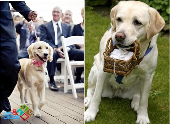 Casamento com cachorro levando as alianças