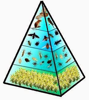 Macam-Macam Bentuk Piramida Ekologi