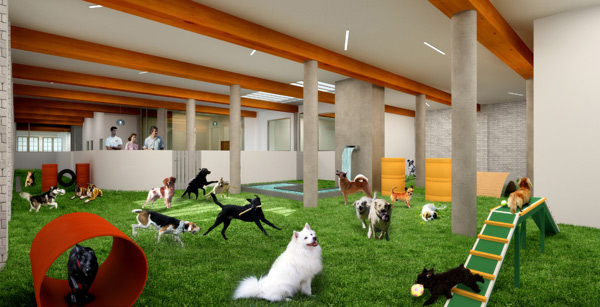 Oasis Indoor Dog Park
