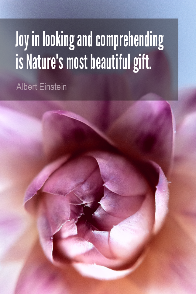 visual quote - image quotation for HAPPINESS - Joy in looking and comprehending is Nature's most beautiful gift. - Albert Einstein