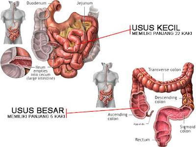 http://ciriterkenapenyakitkankerpayudara.blogspot.com/2015/08/pengobatan-kanker-usus-besar-setelah.html