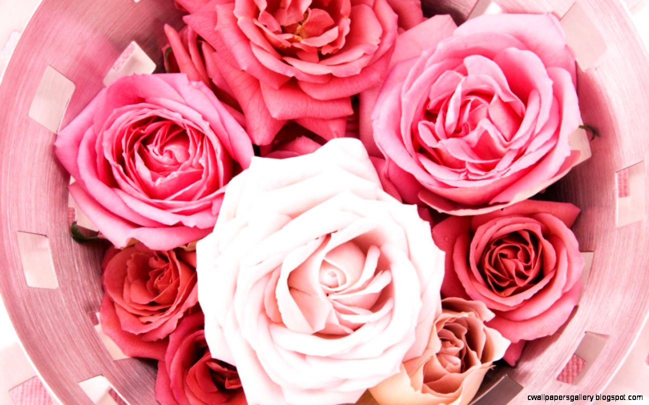 Pink Roses Wallpaper Tumblr  Full HD Pictures