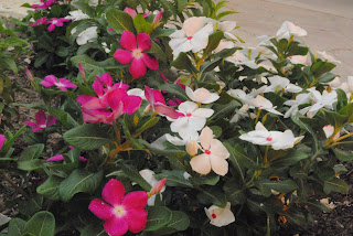 summer flowers pink white