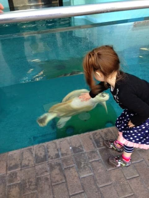 girl high-fiving a turtle, Mote Aquarium