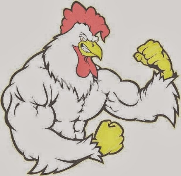 Tips mengatasi Ayam aduan yang kelebihan otot