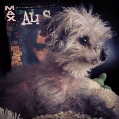 Murchie lays on a fuzzy pillow, his head raised and his ears perked. Behind him is a trade paperback copy of Alias. Murchie blocks most of it, but the primary colours are dark green and