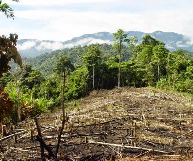 deforestation cuba Palm oil is literally everywhere – in our foods, cosmetics, cleaning products and fuels it's a source of huge profits for multinational corporations, while at the same time destroying the livelihoods of smallholders.