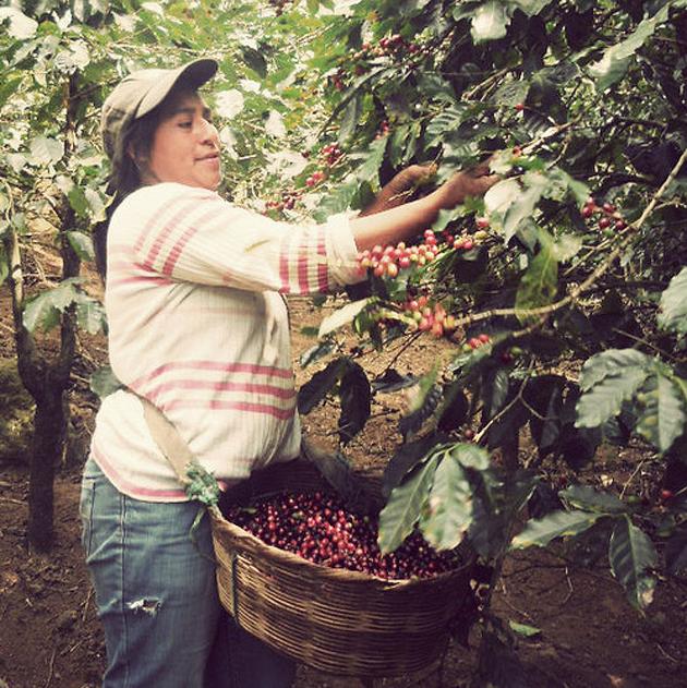 irving farm coffee roasters