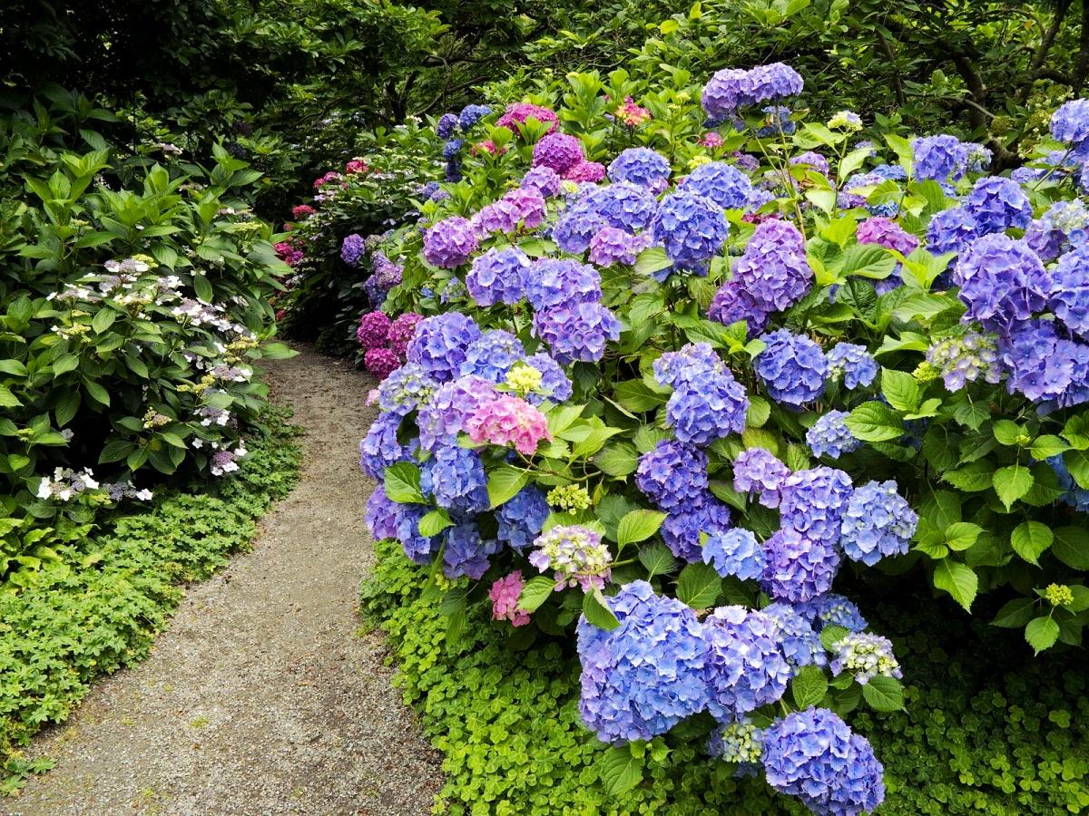 Многолетние цветы фото и названия и кустарники
