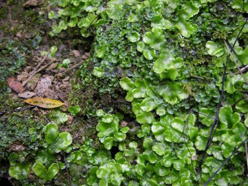 Tipos de Plantas Plantas