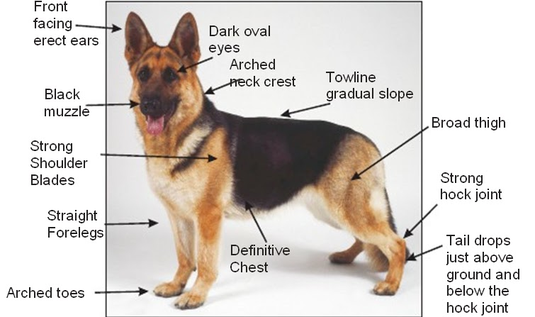 east german gsd