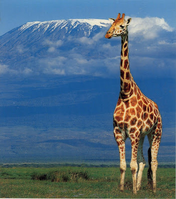 (Tanzania) – Kilimanjaro - Highest Mountain in Africa