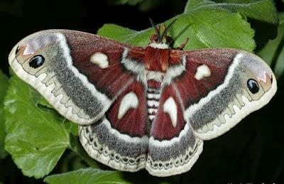 Fluture pe frunza