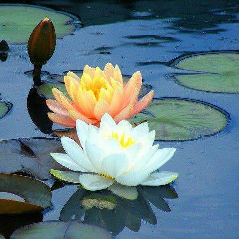 the flower garden  september, Natural flower