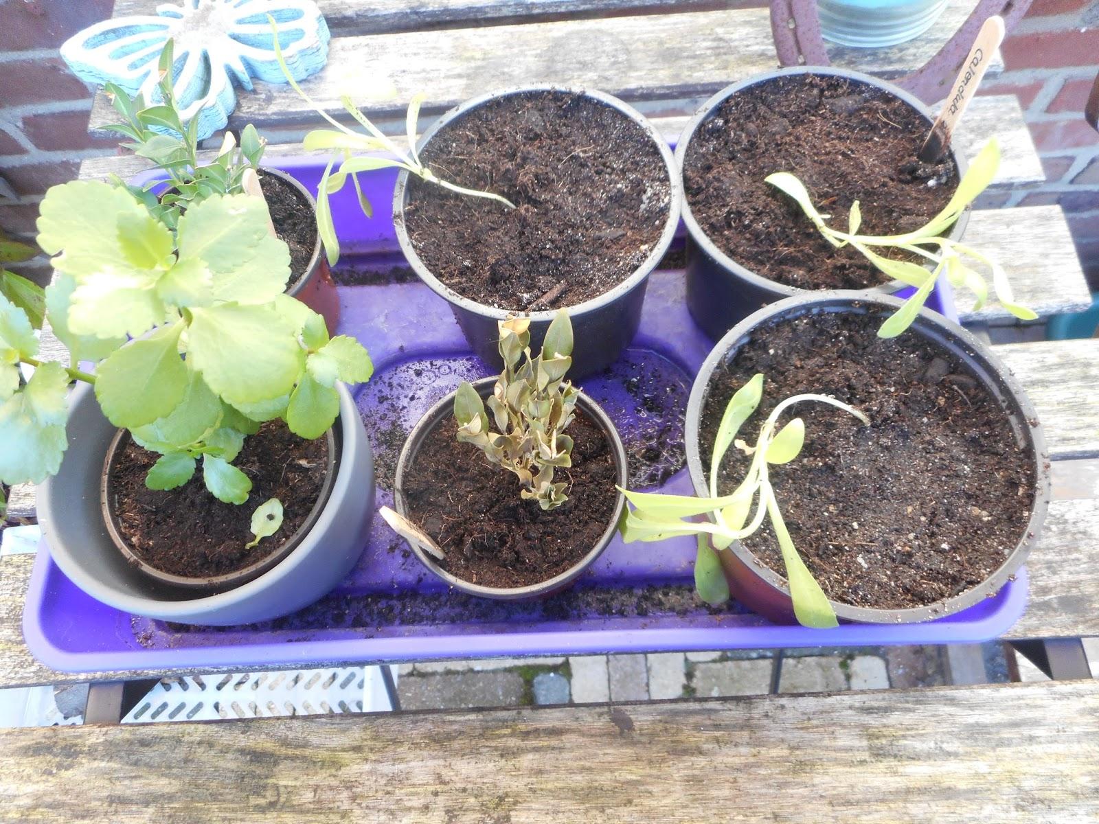 Rust en ruimte in hoofd en huis dag 158 voorjaar of for Kattenpoep in de tuin
