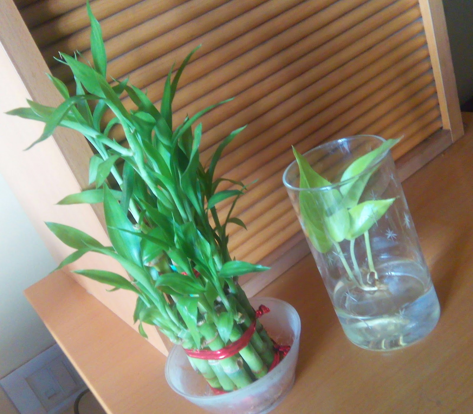100 Best 25 Money Plant In 14 Amazing Diy Teapot