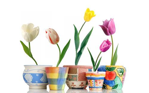Tulipanes para el 10 de Mayo (escribe tu mensaje)