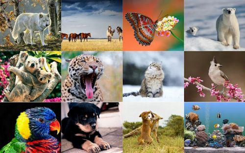 Colección con 12 imágenes lindas para ver y compartir (imagenes facebook )