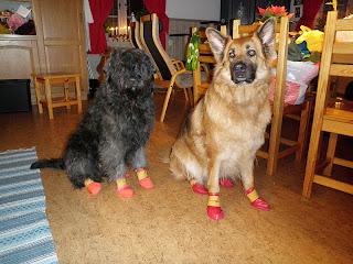 hundtossor