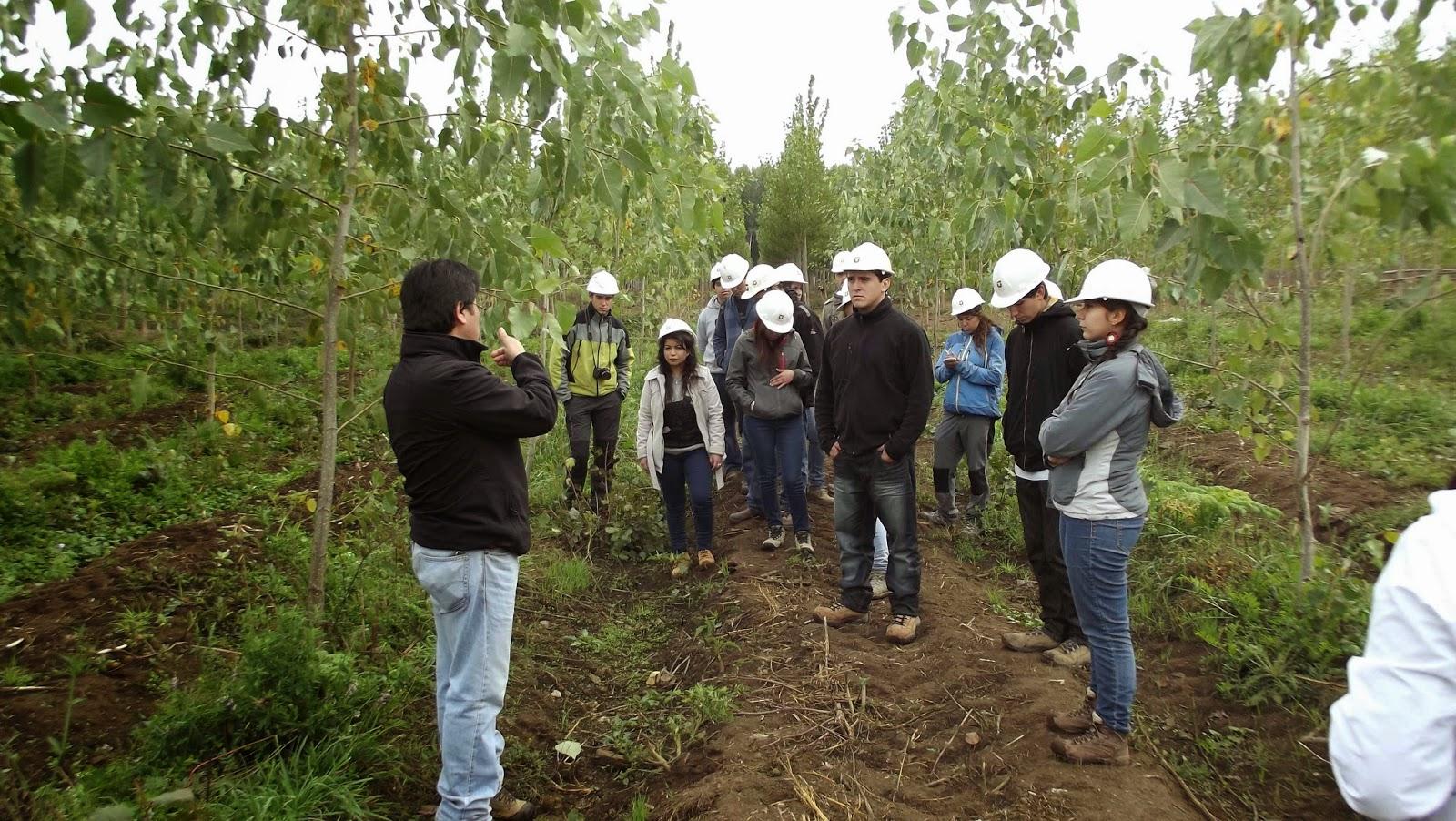 Compa a agr cola y forestal el lamo ltda visita curso for Viveros en talca