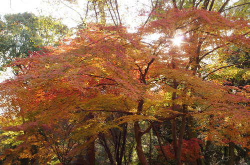 2013年下鴨神社・糺の森の紅葉