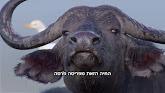 כשרות בעלי חיים | הוכחה לאמיתות התורה