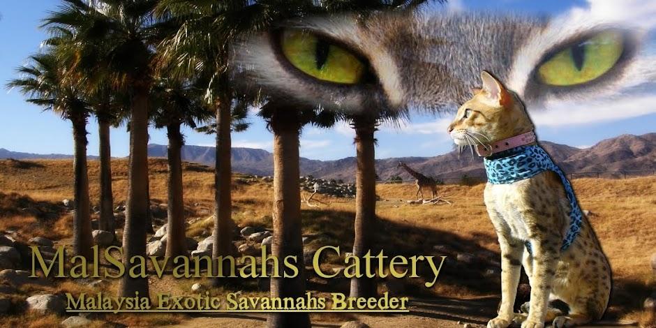 MalSavannahs Caterry Blog