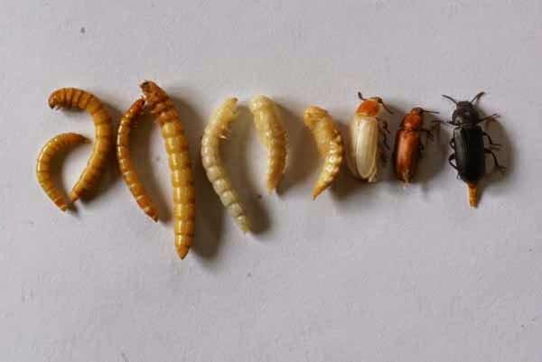 gambar semut
