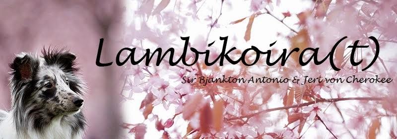 Lambikoira(t)