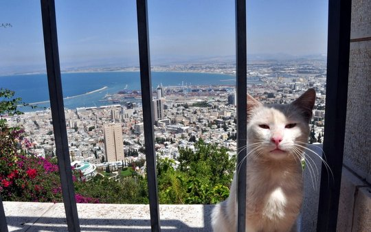 Cat from Haifa Israel