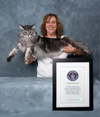 Longest Cat with Guinness Certificate