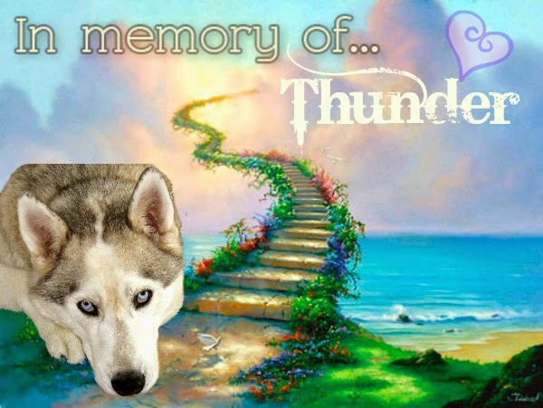 In Memory of Thunder